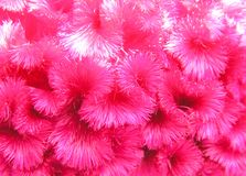 texture de fleur Image libre de droits