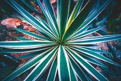 Texture de fond de cactus images libres de droits