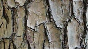 Texture de fond d'écorce Photos libres de droits