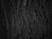 Texture de fond d'écorce d'arbre Photos stock