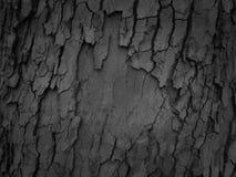 Texture de fond d'écorce d'arbre Photographie stock
