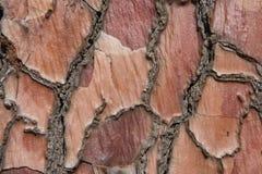 Texture de fond d'écorce d'arbre Photographie stock libre de droits
