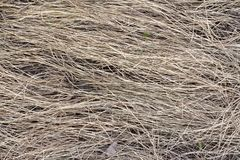 Texture de fond d'herbe sèche, l'année dernière fenaison photos stock