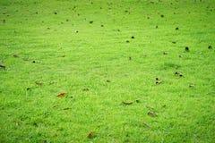 Texture de fond d'herbe verte Image stock
