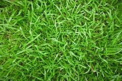 Texture de fond d'herbe verte Images libres de droits