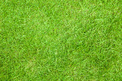 Texture de fond d'herbe verte Photo stock
