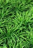 Texture de fond d'herbe verte Image libre de droits