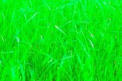 Texture de fond d'herbe verte avec des effets brouillés et flous image libre de droits