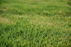 Texture de fond d'herbe verte photos libres de droits