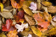 Texture de fond de lames d'automne Photos stock