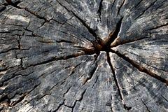 Texture de fond de tronçon Photo libre de droits