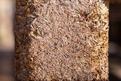 Texture de fond des déchets de bois pressés jaunes photos libres de droits