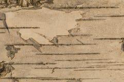 Texture de fond descripteur Écorce d'arbre Macro tir Pano Image stock