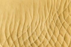 Texture de fond du sable Photographie stock libre de droits