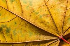 Texture de fond de feuille Photos stock