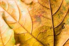Texture de fond de feuille Image libre de droits