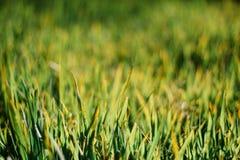 texture de fond naturel d'herbe verte photos stock