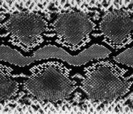 Texture de fond de peau de serpent Copie élégante Fond abstrait dernier cri Serpent de texture illustration de vecteur