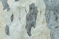 Texture de fond de ride de peau d'arbre Photographie stock