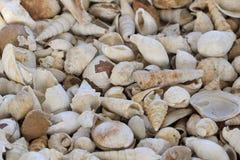Texture de fosils de Shell photographie stock libre de droits