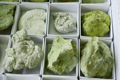 texture de fossile d'ammonites Photographie stock libre de droits
