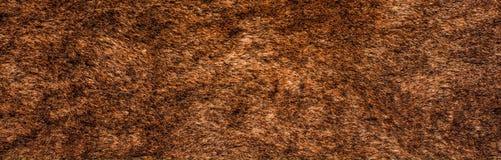Texture de fourrure Photos libres de droits