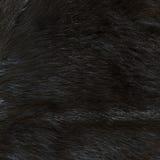 Texture de fourrure Images libres de droits