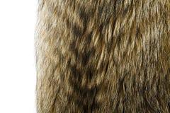 Texture de fourrure Fourrure de chien de raton laveur Photographie stock