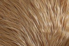 Texture de fourrure dans le beige photographie stock libre de droits