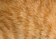 Texture de fourrure de chat Photographie stock libre de droits