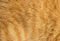 Texture de fourrure de chat Image libre de droits