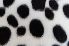 Texture de fourrure de chien Images libres de droits