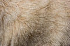 Texture de fourrure de chien Photo libre de droits