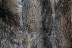 Texture de fourrure morte de loup Photo libre de droits
