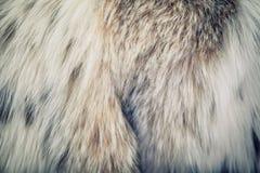 Texture de fourrures Images libres de droits