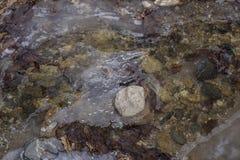Texture de glace sur la rivière Photo libre de droits