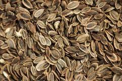 Texture de graines d'aneth Images stock