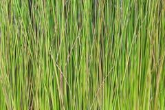 Texture de groupe d'arbre de plantes vertes, fond naturel de modèles images libres de droits