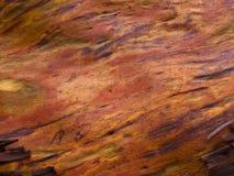 Texture de haute résolution d'arbre d'Arbutus photo libre de droits