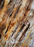 Texture de joncteur réseau d'arbre Photos libres de droits