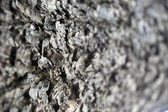 Texture de joncteur réseau d'arbre Photographie stock