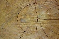 Texture de l'arbre de coupure Photos libres de droits
