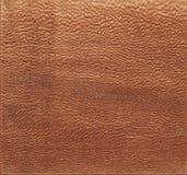Texture de l'arbre sur la coupe de scie Couleur de gingembre image libre de droits