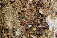 Texture de l'?corce brune d'un arbre photos libres de droits