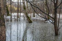 Texture de l'eau de fonte dans la mousse tôt de vert forêt de ressort sur l'arbre Photos libres de droits
