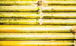 Texture de la frontière de sécurité en bambou, fond de nature Photo libre de droits