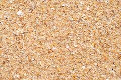 Texture de la surface douce du sable humide avec des fragments des coquilles, fond photos libres de droits