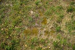 Texture de la terre avec l'herbe, pavés ronds, pierres photos stock