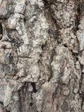 Texture de la vieille écorce brune Photo stock