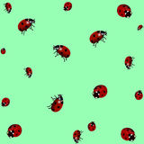 Texture de Ladybird Conception réaliste Illustration de vecteur Photo stock